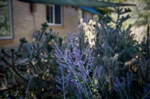 lavendersunflowerpreschool_lr-4535